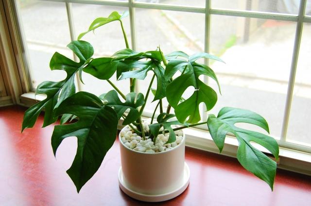 観葉植物のイメージ画像
