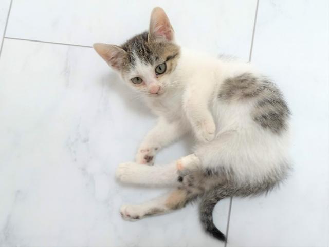 ネコのイメージ画像
