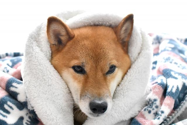 犬の毛布のイメージ画像