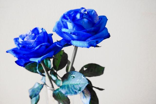 青いバラのイメージ画像