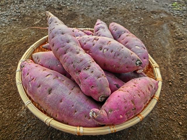 サツマイモのイメージ画像2